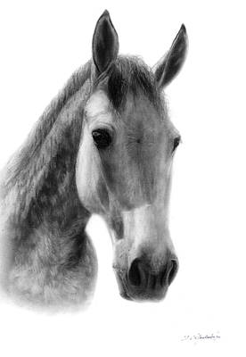 Horse Painting - The Spotted Horse by Danguole Serstinskaja