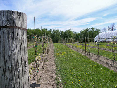 Winery Photograph - The Spring Planting by Janis Beauchamp