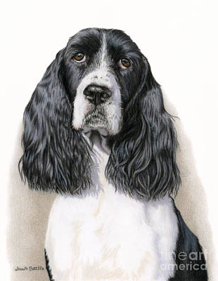 White Drawing - The Springer Spaniel by Sarah Batalka