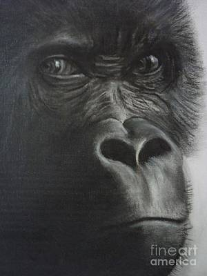 Gorilla Drawing - The Stare by Paul Horton
