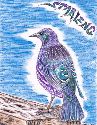 Starlings Drawing - The Starling by Bryant Lamb