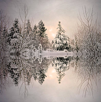 Photograph - The Still Trees Of Winter by Tara Turner