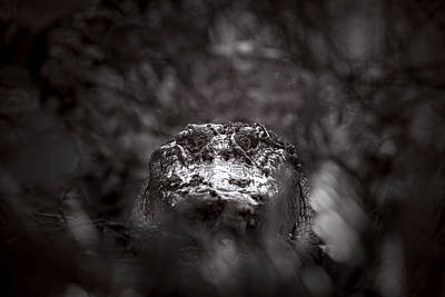 Alligator Photograph - Lair Of The Swamp Queen by Mark Andrew Thomas