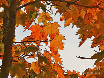 Autumn Photograph - The Sweetgum Tree Nbr. 2 by Scott Cameron