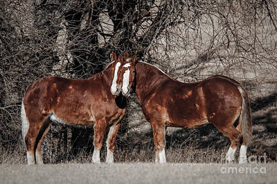 Belgian Draft Horse Photograph - The Team by Lynn Sprowl