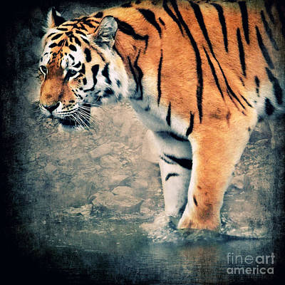 Tigers Print featuring the digital art The Tiger by Angela Doelling AD DESIGN Photo and PhotoArt