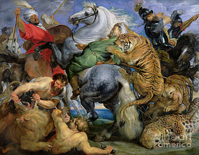 Lions Painting - The Tiger Hunt by Rubens
