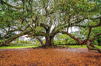 Live Oaks Photograph - The Tree Of Life by Steve Harrington