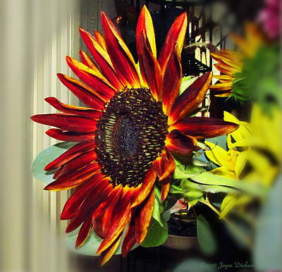 Photograph - The Ultimate Sunflower by Joyce Dickens