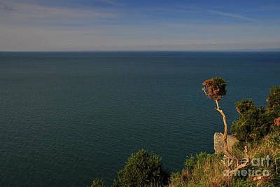 Devon Photograph - The Valley Of The Rocks by Stephen Smith