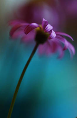 Pinks And Purple Petals Photograph - The View Above by Kym Clarke