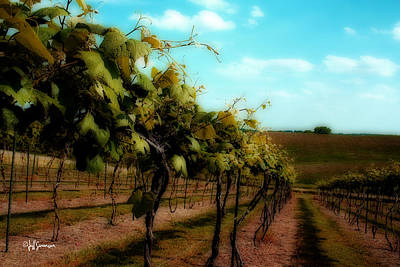 The Vineyard Print by Jeff Swanson