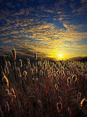 Environement Photograph - The Watchers by Phil Koch