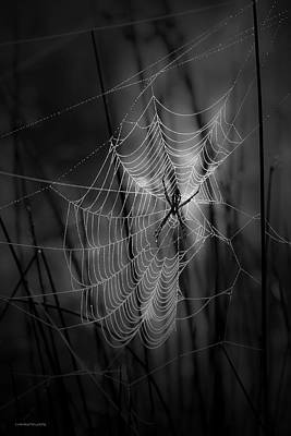 The Weaver Print by Ron Jones