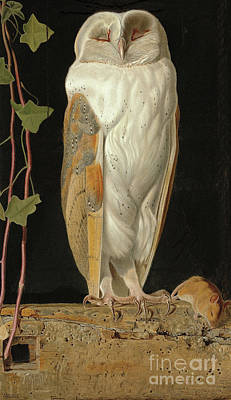 Snowy Trees Painting - The White Owl by William J Webbe