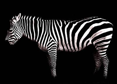 Blavk And White Photograph - The White Stripes by Osvaldo Hamer