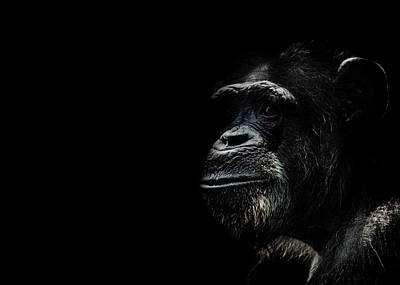 Ape Photograph - The Wise by Martin Newman