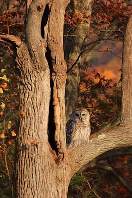 Owl Mixed Media - The Wise Owl by Lori Deiter