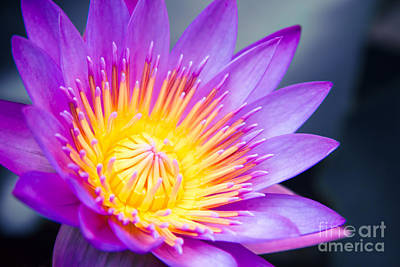 Makro Photograph - The World Is A Garden by Sharon Mau