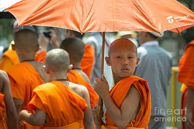 The Young Monk  Print by Rob Hawkins