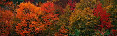 Vivid Fall Colors Photograph - These Shows The Autumn Colors by Panoramic Images