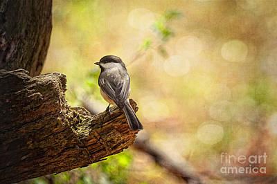Chickadee Digital Art - Thinking Of Spring by Lois Bryan