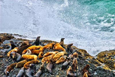This Is Oregon State No.18 - Sea Lion Splash Print by Paul W Sharpe Aka Wizard of Wonders