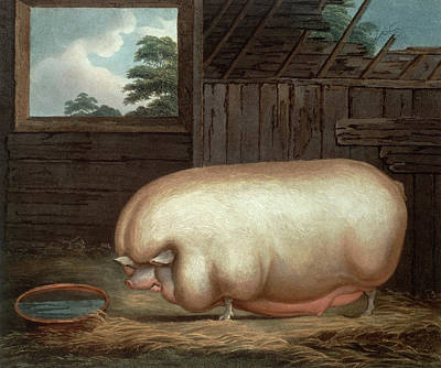 Fed Painting - This Remarkable Animal by Benjamin Gale
