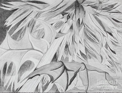 Drawing - Thistle by Stella Sherman