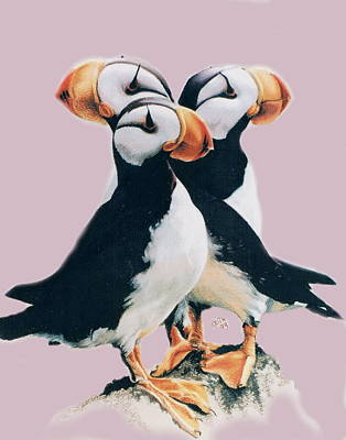 Puffin Drawing - Three Amigoes by Barbara Keith