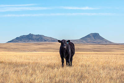 Angus Steer Photograph - Three Buttes Steer by Todd Klassy