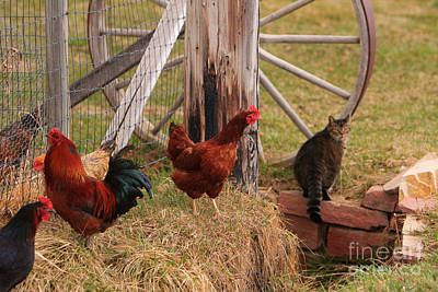 The Lightning Man Photograph - Three Chickens And A Cat by James BO  Insogna