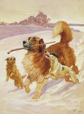 Three Dogs Playing In The Snow Print by John Charlton