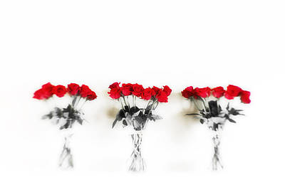 South Louisiana Photograph - Three Dozen Roses by Scott Pellegrin