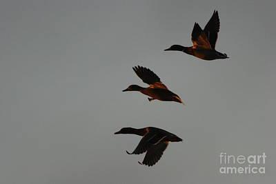 Three Duck Night Print by Morgan Hill