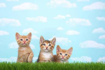 Breed Digital Art - Three Kittens In Tall Grass  by Sheila Fitzgerald