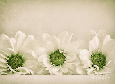 Three O0o Print by SK Pfphotography
