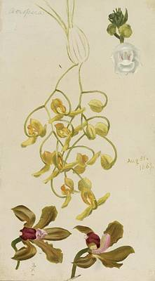 Three Orchids Print by William Jacob