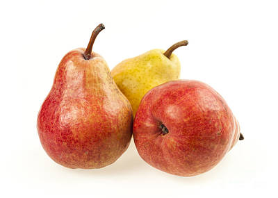 White Photograph - Three Pears by Elena Elisseeva