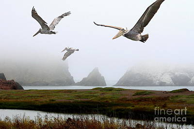 Sausalito Photograph - Three Pelicans by Wingsdomain Art and Photography