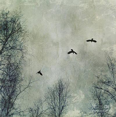 Winter Trees Photograph - Three Ravens by Priska Wettstein