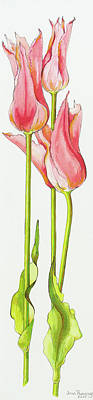 Tulips Drawing - Three Red Lily-flowered Tulips Marianne by Joan Thewsey