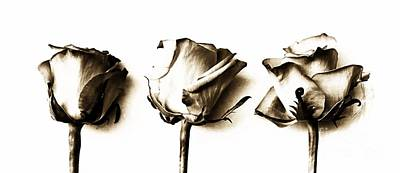 Sepia Flowers Photograph - Three Roses by Clare Bevan