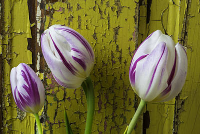 White Tulip Photograph - Three Tulips Against Yellow Wall by Garry Gay