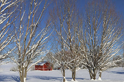 Red Barn In Winter Photograph - Through The Branches by Wild Fire
