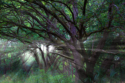 Artistic Photograph - Through The Canopy by J Darrell Hutto