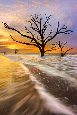 Edisto Photograph - Tidal Trees - Craigbill.com - Open Edition by Craig Bill