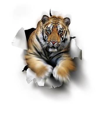 Tiger, Artwork Print by Smetek