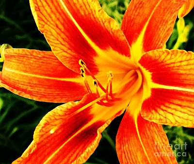 Stamen Digital Art - Tigerlily Close Up                     by Marsha Heiken