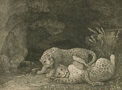 Wrestling Drawing - Tigers At Play by George Stubbs